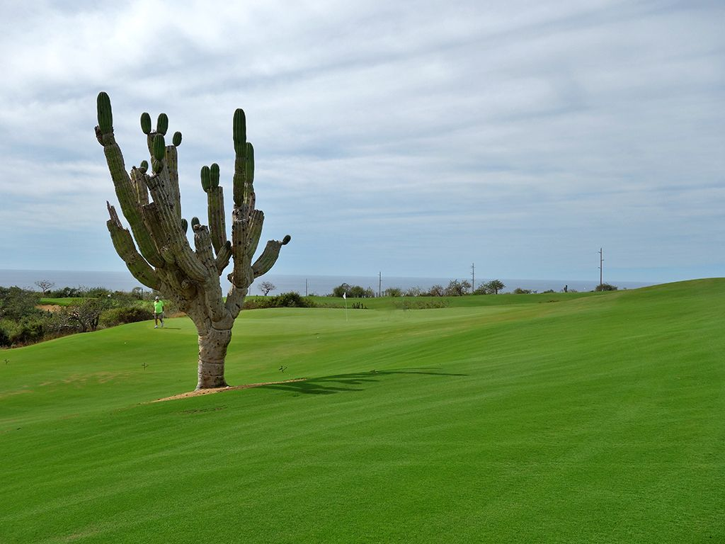 15th Hole at Diamante (El Cardonal) (462 Yard Par 4)