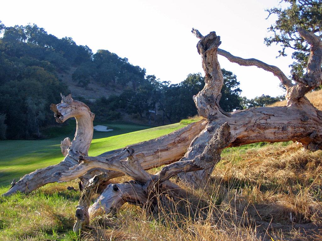 15th Hole at Preserve Golf Club (443 Yard Par 4)